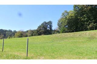 Grundstück zu kaufen in 8333 Schützing, Ländliche IDYLLE Grundstück 2195m² nahe Feldbach
